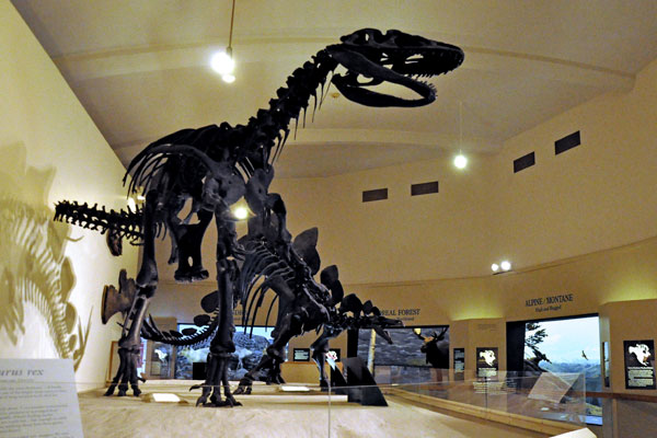 A photograph of two dinosaur skeletons and the biome habitats in Habitat Hall.