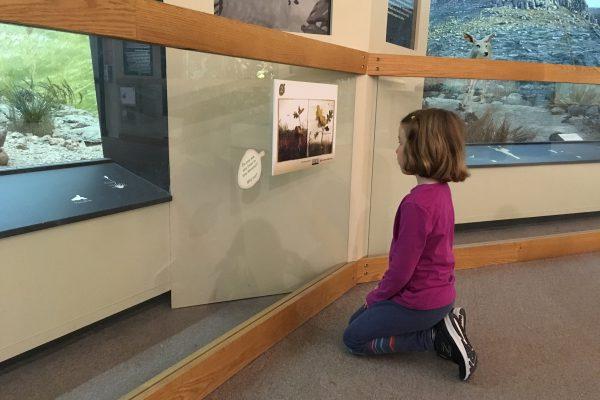StoryWalk at the MSU Museum