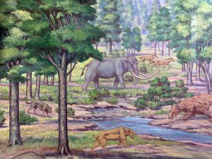 Painting in the Hall of Evolution at the MSU Museum Depicting a Dire Wolf