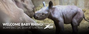 Welcome Baby Rhino! Born Dec. 24, 2019 at 5:40 a.m. at the Potter Park Zoo Photography by Kaiti Chritz | Potter Park Zoo