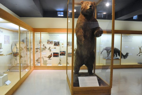 Brown bear and other animals in Animal Diveristy museum gallery