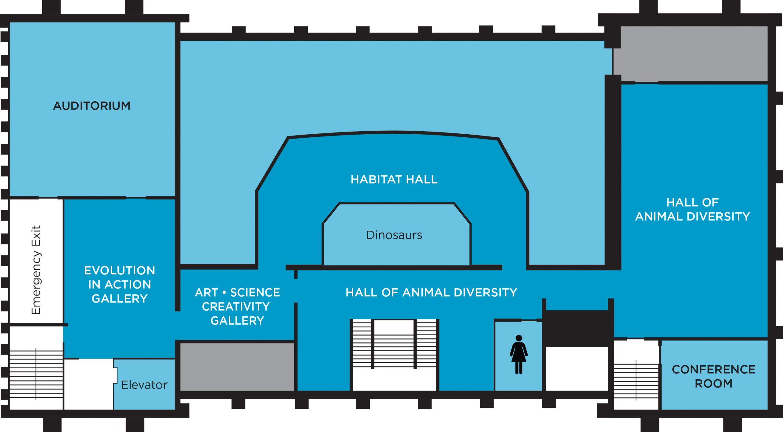 MSU Museum second floor plan