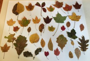 38 colorful leaves on a white board
