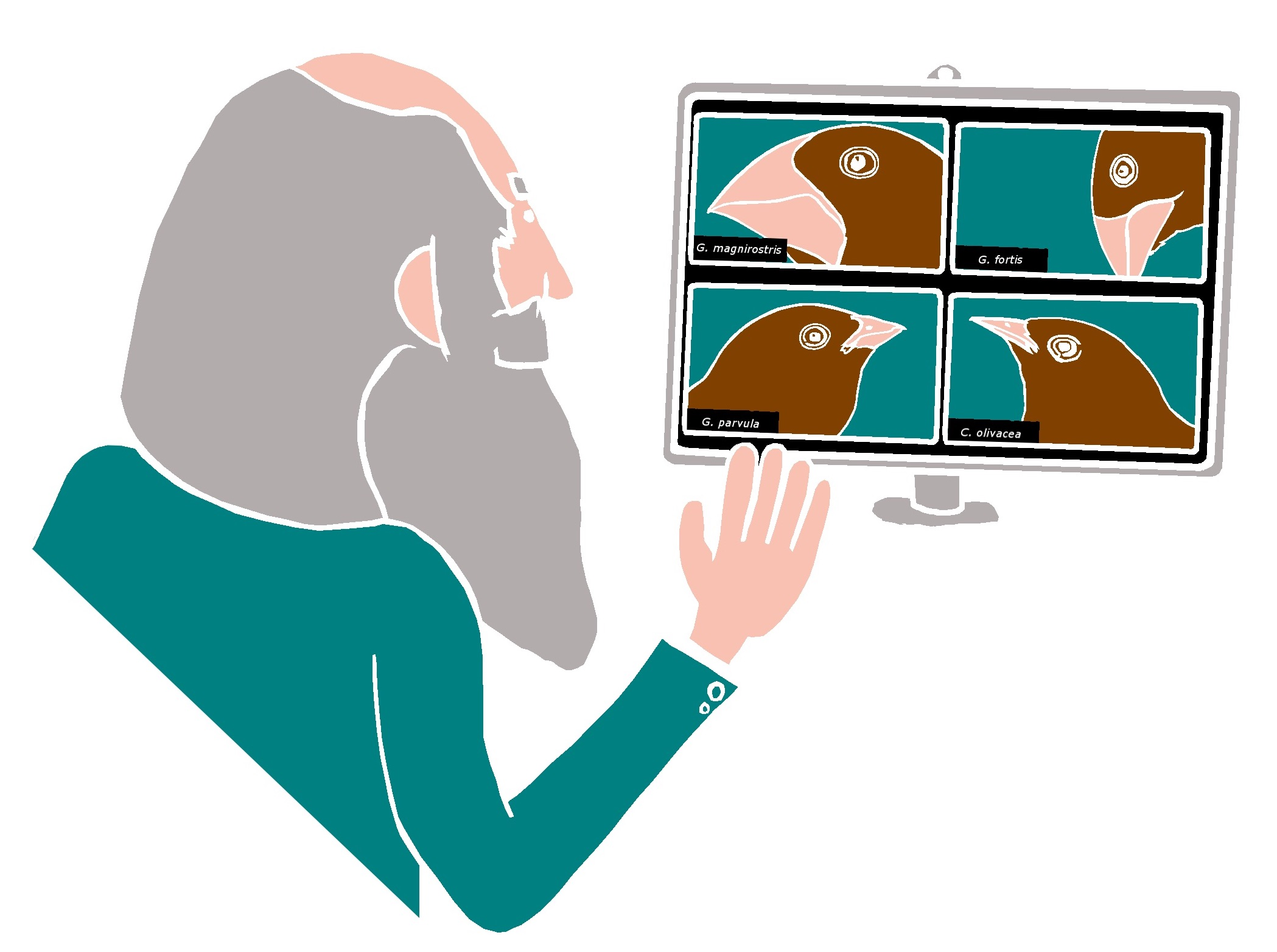 Cartoon drawing of Charles Darwin in front of a video conference call on computer screen