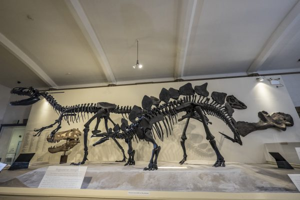 Dinosaurs in Habitat Hall