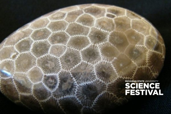 Petoskey stone, Michigan State University Science Featival