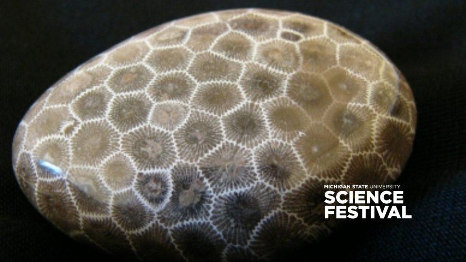 Petoskey stone, Michigan State University Science Featival